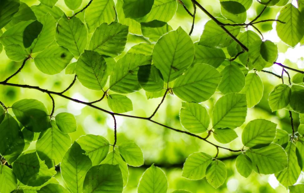 Gröna löv